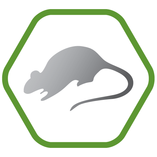 Rat control and prevention