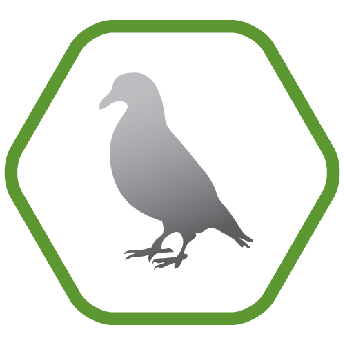 Bird control and prevention